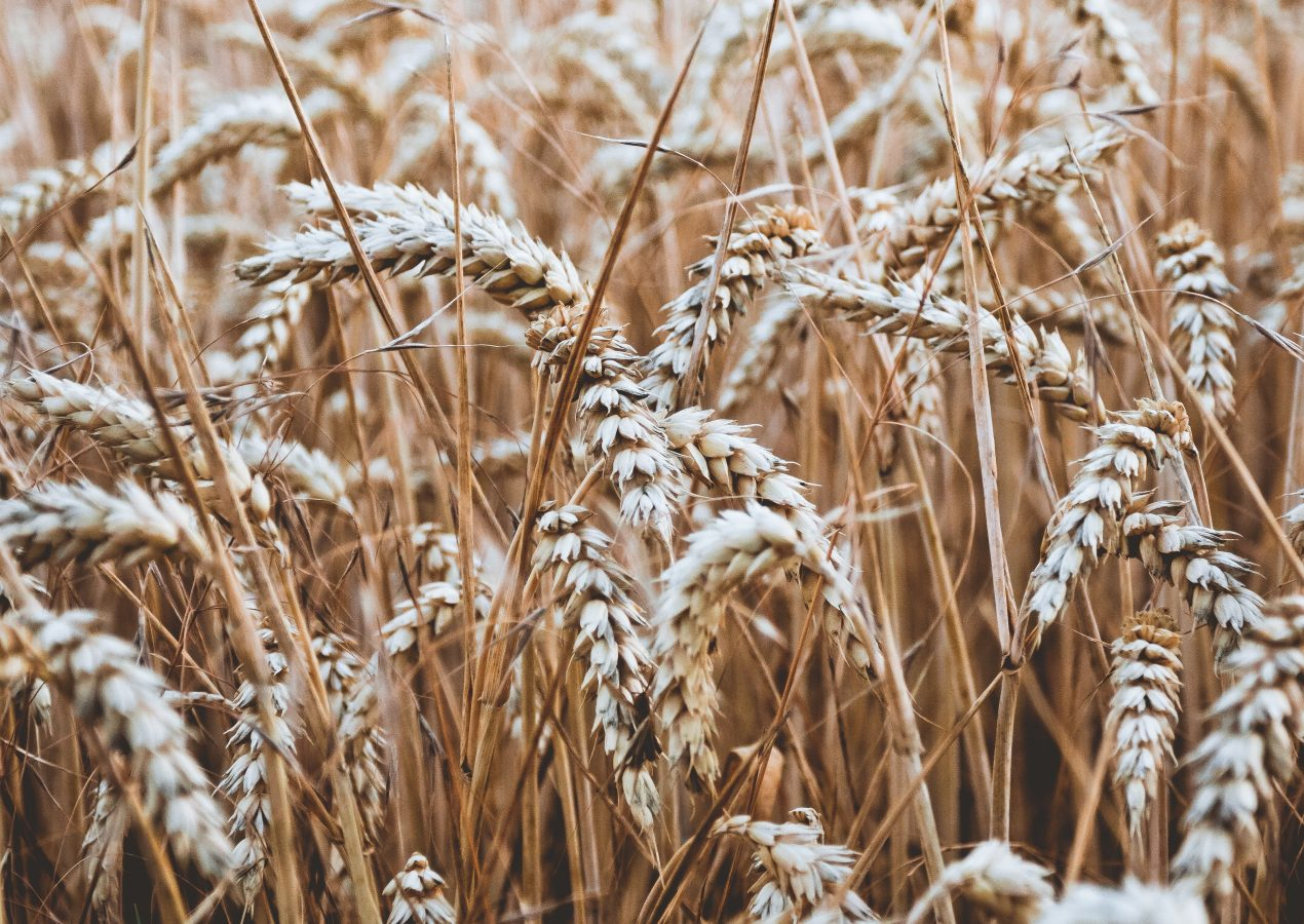 Fibre and its Role in the Body